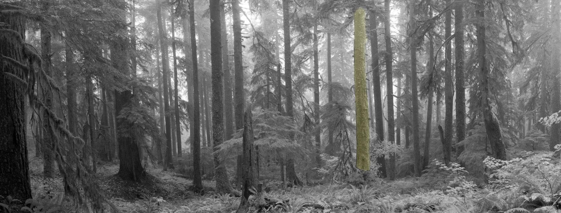 trees-1840x-v2